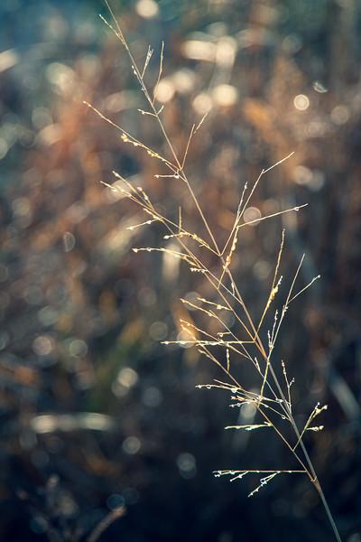 Dew on Grass Frond