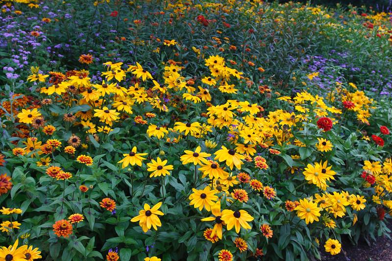 Flower Garden in Full Color
