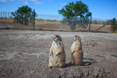 Watchdogs of the Prairie