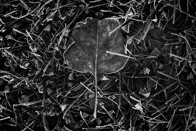Autumn Artifact [6]