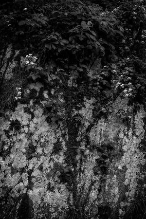 Ivy Bouquet