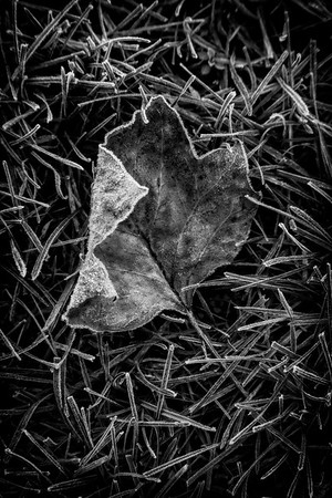 Autumn Artifact [1]