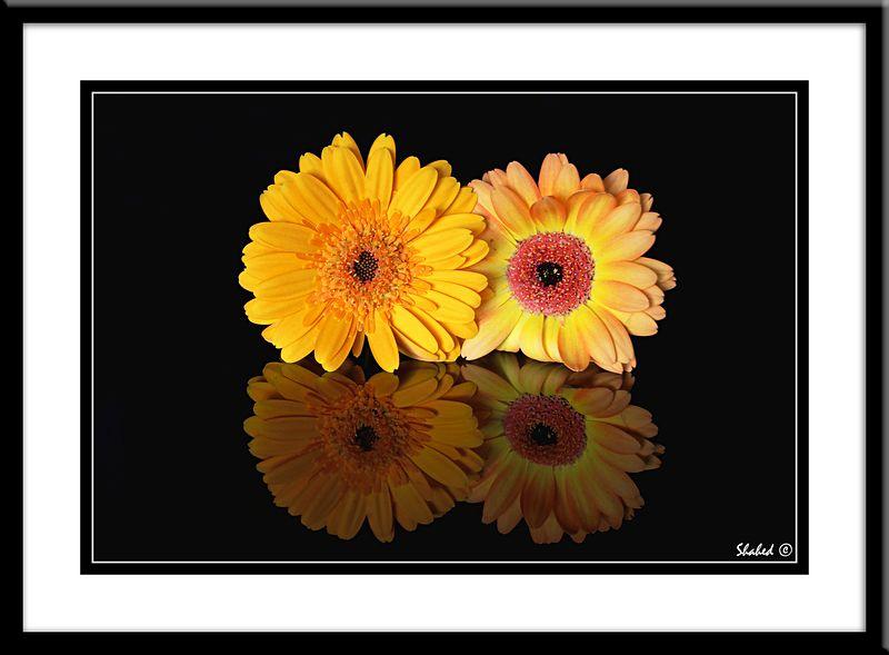 "Ref #5180-C  <span id=""caption""><div class=""photocredit"">Photo © LenScape Photography</div></span>"