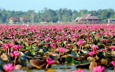Thale Noi Waterfowl Park, Phatthalung, Thailand (2)