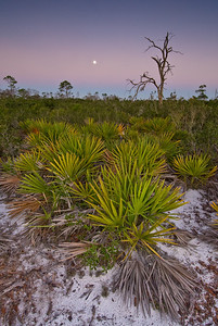 Moonset at dawn over scrub