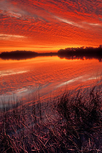 Spectacular sunset at Paurotis Pond in Everglades National Park