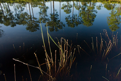 Reflections in seasonal pond at Archbold Biological Station, Lake Placid, FL