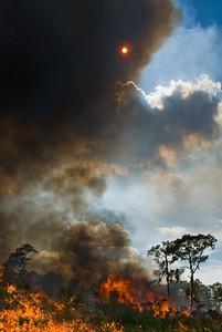Red sun during a prescribed burn at Archbold Biological Station, Lake Placid, FL