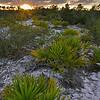 Sunset on Rosemary Hill at Archbold Biological Station, Lake Placid, FL