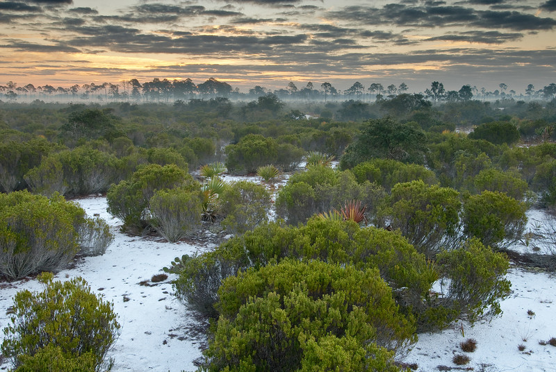 'Predawn light over rosemary scrub' by Reed Bowman