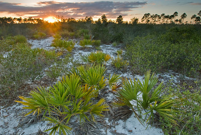 Sunset on Rosemary Hill at Archbold Biological Station, Lake Placid, FL