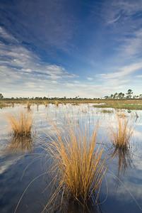 Seasonal pond at Archbold Biological Station, Lake Placid, FL