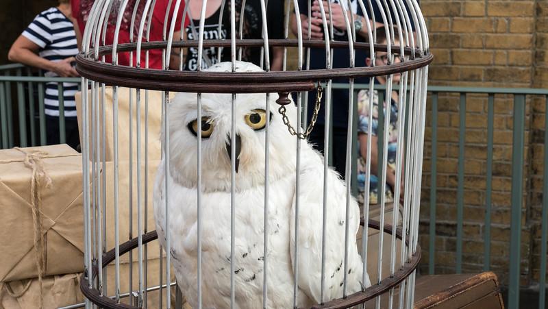Hedwig - Harry Potter's owl