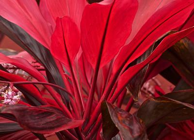 Scarlet shrubs
