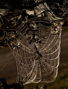 Spiders web in the morning dew