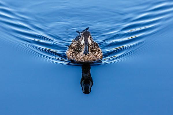 Blue Waters-6713