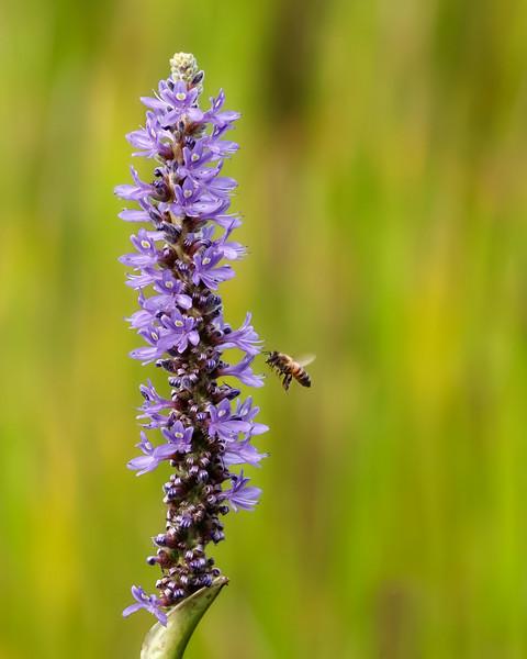 Tasty Wildflower