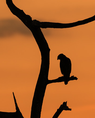Sunset Perch