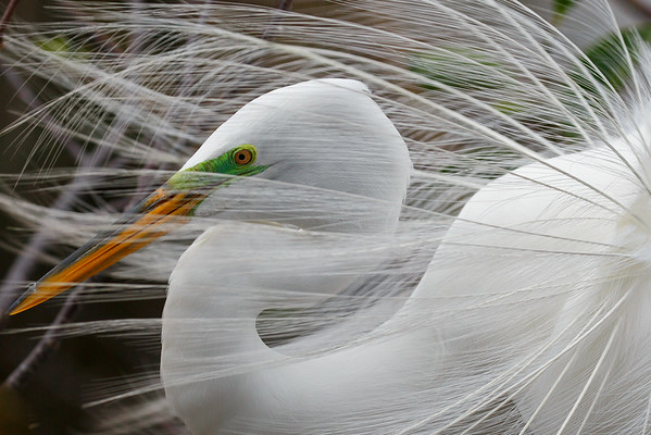 Florida Nature Preserves