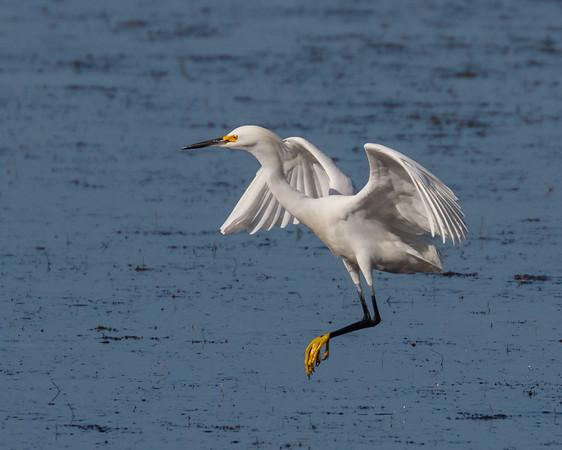 Egret Landing-7897
