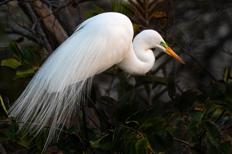 Egret-4400