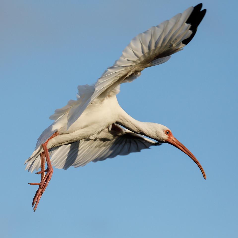 Ibis Landing-2834