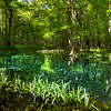 Green Run - Gilchrist Blue Springs State Park, Fl 2021