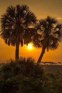 Palm Sunrise