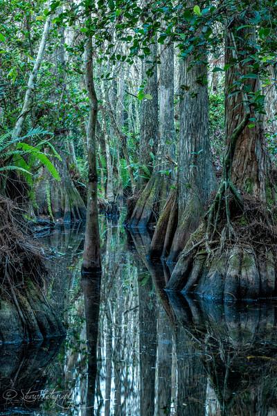 Cypress Passage - Big Cypress Preserve, FL 201