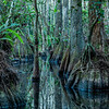 Cypress Passage - Big Cypress Preserve, FL 201
