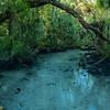The crack I - Chassahowitzka River, Fl 2021