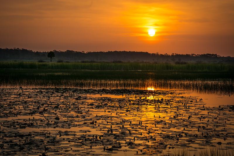 St. Marks wetlands at sunrise