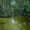 Emerald Cut after heavy rain - Orlando, FL 2019