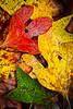 Autmns Leaves