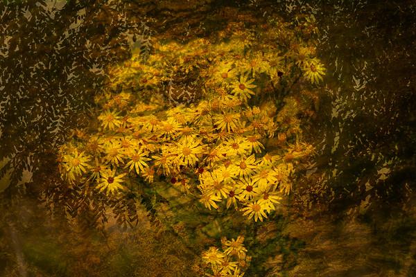 Sunflowers composite