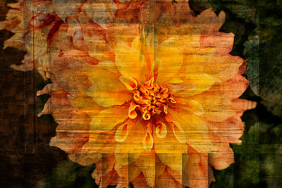 Dahlias with wood textures
