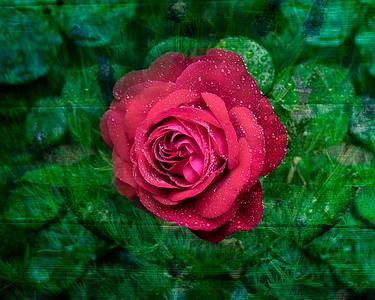 Red Rose Composite