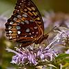 Butterfly on a Flower Closeup