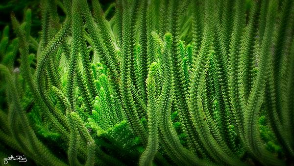 Green Things