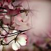 Underneath the Magnolia Tree