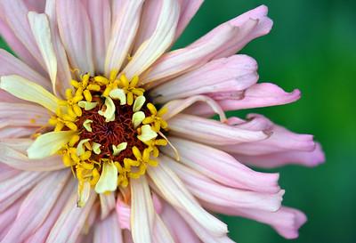 Flowers - Non Australian