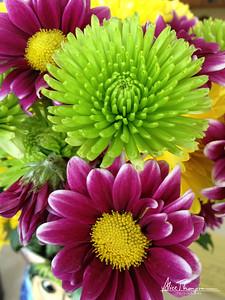 Green Mums, Purple Daisies