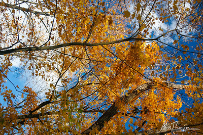 Fall Trees at Bernheim Arboretum