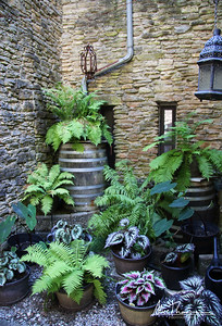 Ferns at Loveland Castle Museum - Loveland, OH