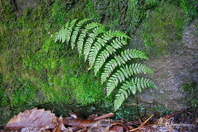 Fern and Rock
