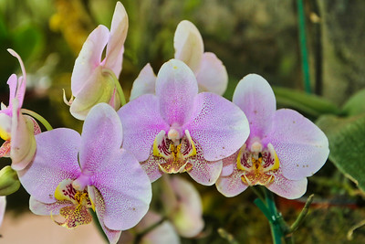 Colorful Purple Tropical orchid flowers