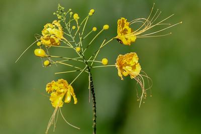 Mellow Yellow Flower
