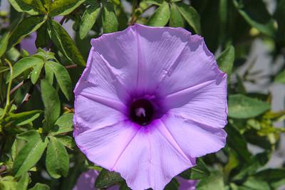 Purple flower in a garden