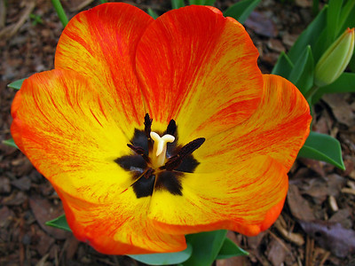 2008's Best Outdoor Floral (37)
