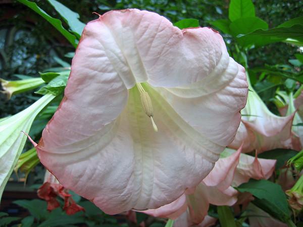 2008's Best Outdoor Floral (2)